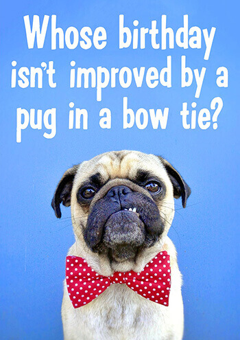Who's Birthday Isn't Improved By A Pug In A Bow Tie? Birthday Card