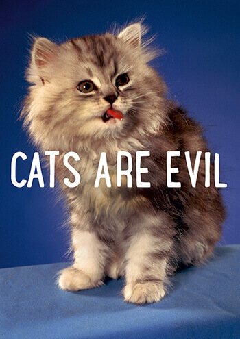 Cats Are Evil Funny Birthday Card