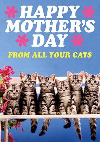 Happy Mother's Day From All Your Cats Funny Card