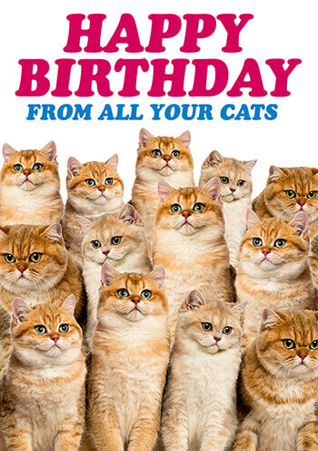 Happy Birthday From All Your Cats Funny Card 250 By Dean Morris Cards