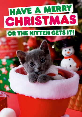 Kitten Christmas Cards.Have A Merry Christmas Or The Kitten Gets It Funny Christmas Card