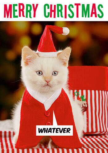 Merry Christmas Funny Images.Merry Christmas Whatever Funny Christmas Card