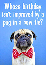 Who's birthday isn't improved by a pug in a bow tie?