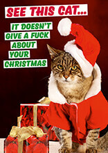 See This Cat. It Doesn't Give A Fuck About Your Christmas Card